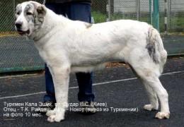 10_mes._Suka._Ukraina(Dudar)